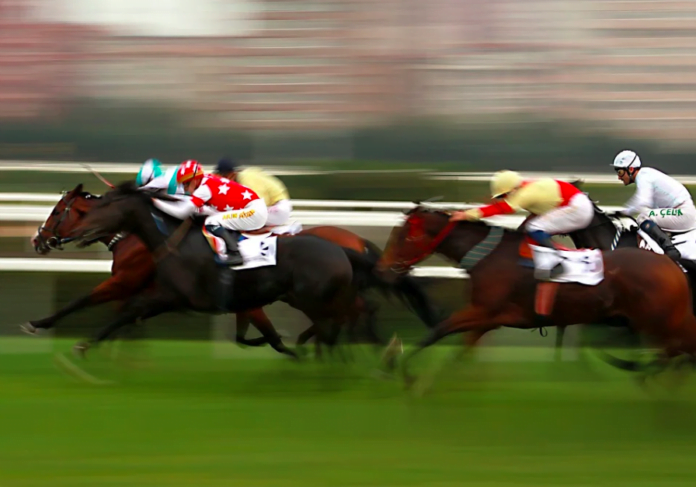 How to place bets on belmont stakes capital horse betting